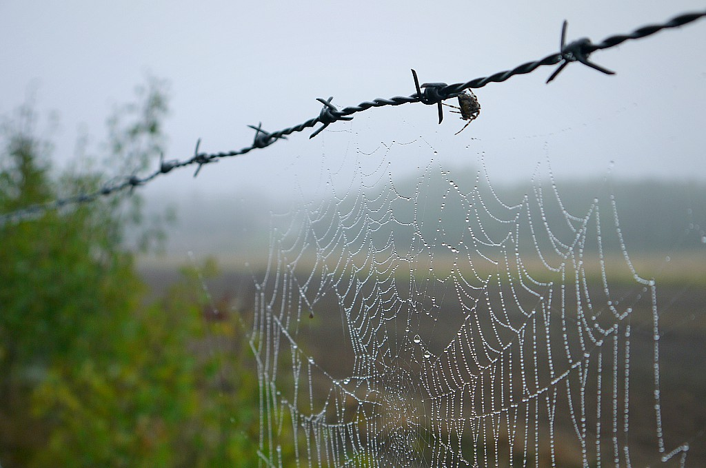 varmare klimat ger läskiga spindlar
