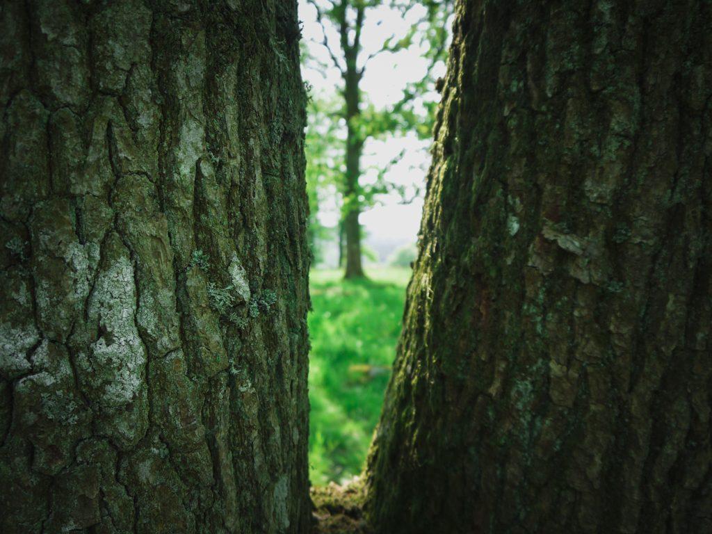 träd natur bark