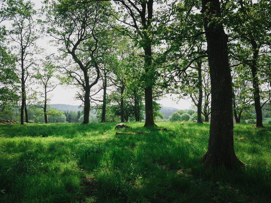 träd natur skog glänta