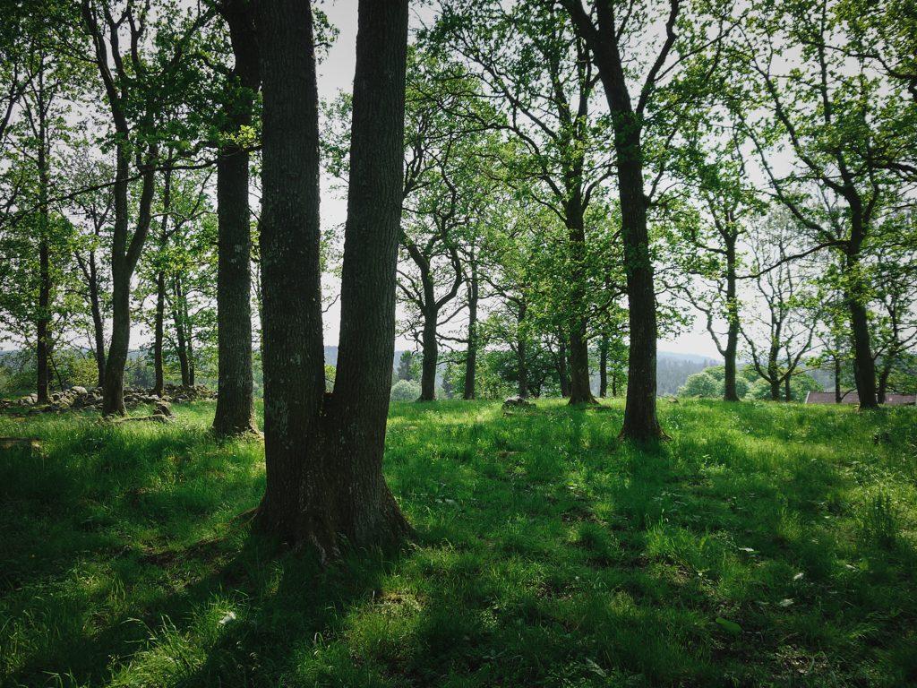 träd natur skog